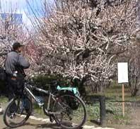 自転車の 自転車 バックライト 点滅 : 私にとってこの自転車が気に ...